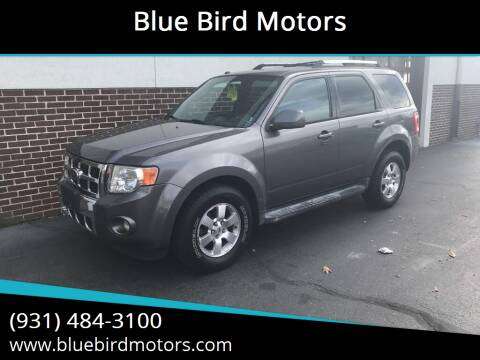 2010 Ford Escape for sale at Blue Bird Motors in Crossville TN