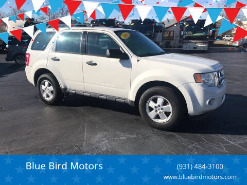 2011 Ford Escape for sale at Blue Bird Motors in Crossville TN