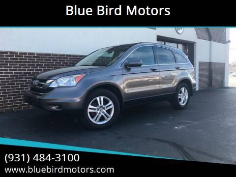 2011 Honda CR-V for sale at Blue Bird Motors in Crossville TN