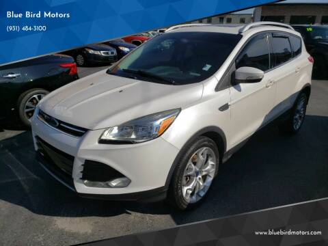 2014 Ford Escape for sale at Blue Bird Motors in Crossville TN