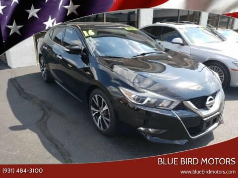 2016 Nissan Maxima for sale at Blue Bird Motors in Crossville TN