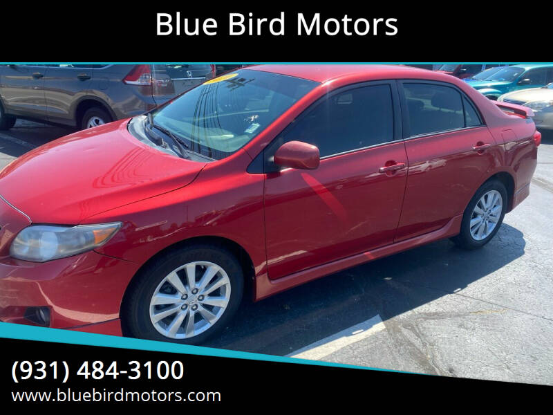 2010 Toyota Corolla for sale at Blue Bird Motors in Crossville TN